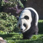 120916_Zoo de Beauval_0522