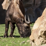 120916_Zoo de Beauval_0554