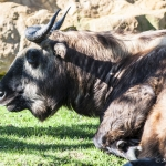 120916_Zoo de Beauval_0557