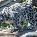 120916_Zoo de Beauval_0565