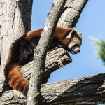 120916_Zoo de Beauval_0571