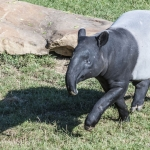 120916_Zoo de Beauval_0575