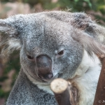120916_Zoo de Beauval_0605