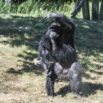 120916_Zoo de Beauval_0647