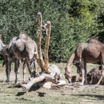 120916_Zoo de Beauval_0649