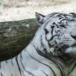 120916_Zoo de Beauval_0684