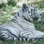 120916_Zoo de Beauval_0685