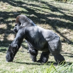 120916_Zoo de Beauval_0710