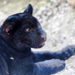120916_Zoo de Beauval_0721