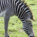 120916_Zoo de Beauval_0729