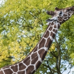 120916_Zoo de Beauval_0740