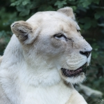 120916_Zoo de Beauval_0748