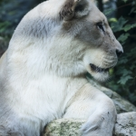 120916_Zoo de Beauval_0749