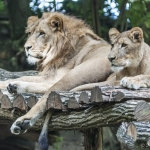 120916_Zoo de Beauval_0761