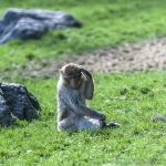 120916_Zoo de Beauval_0765