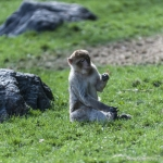 120916_Zoo de Beauval_0767
