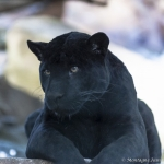 120916_Zoo de Beauval_0768