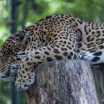 120916_Zoo de Beauval_0769