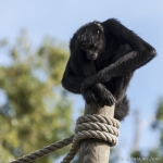 120916_Zoo de Beauval_0771