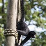 120916_Zoo de Beauval_0772