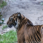 120916_Zoo de Beauval_1011