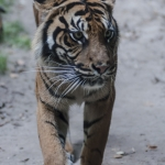 120916_Zoo de Beauval_1019