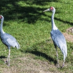 120916_Zoo de Beauval_0582