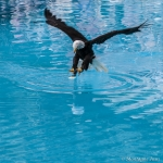 120916_Zoo de Beauval_0932