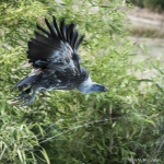 120916_Zoo de Beauval_0973