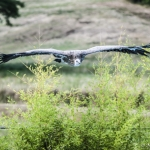 120916_Zoo de Beauval_0981