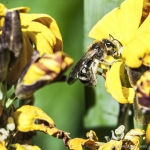 120503_Insectes_0005