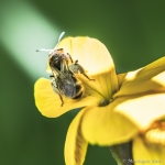120503_Insectes_0007