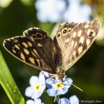 120507_Insectes_0003