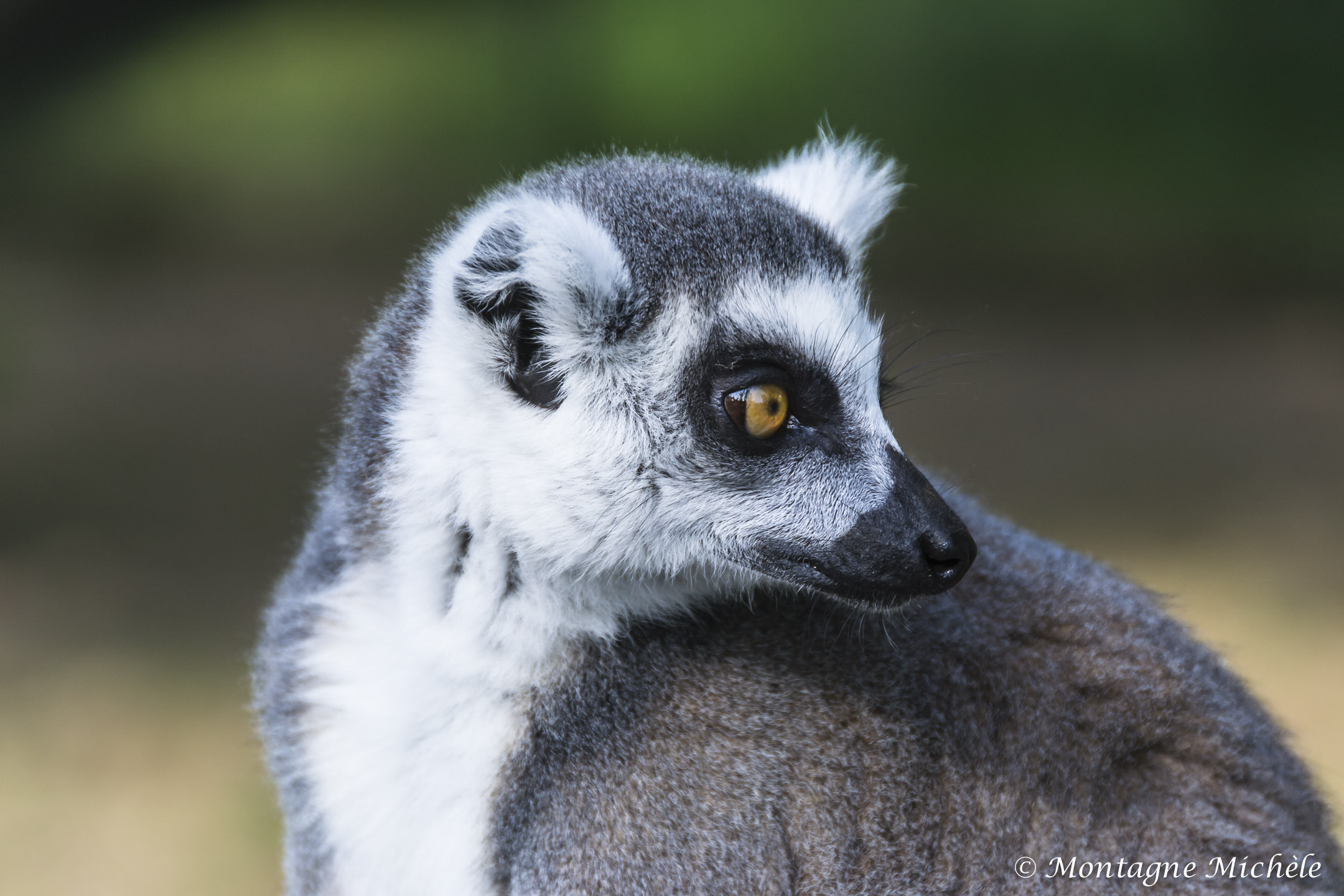 140909_Spaycific Zoo_0005-2
