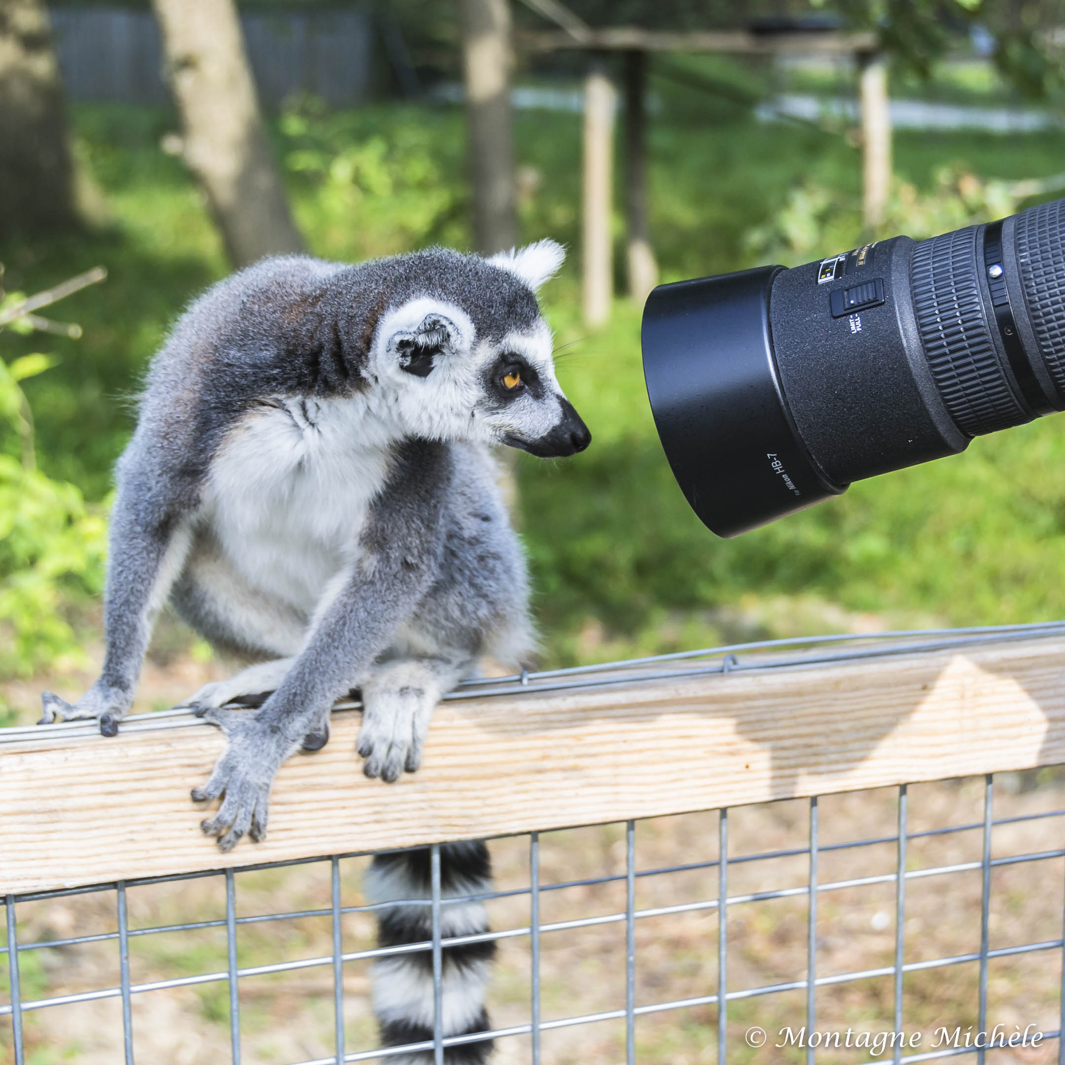 140909_Spaycific Zoo_0006-2