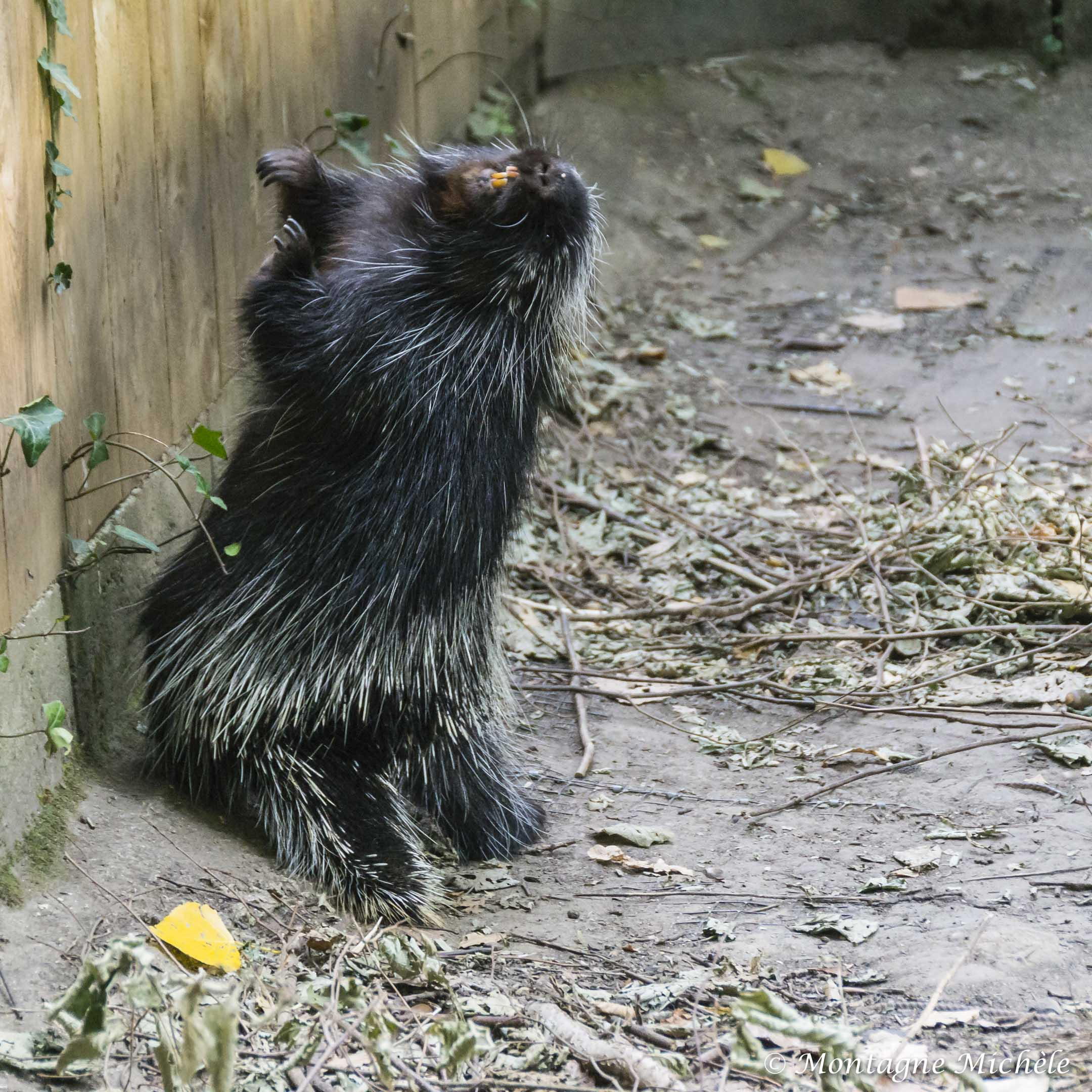 140909_Spaycific Zoo_0016-2