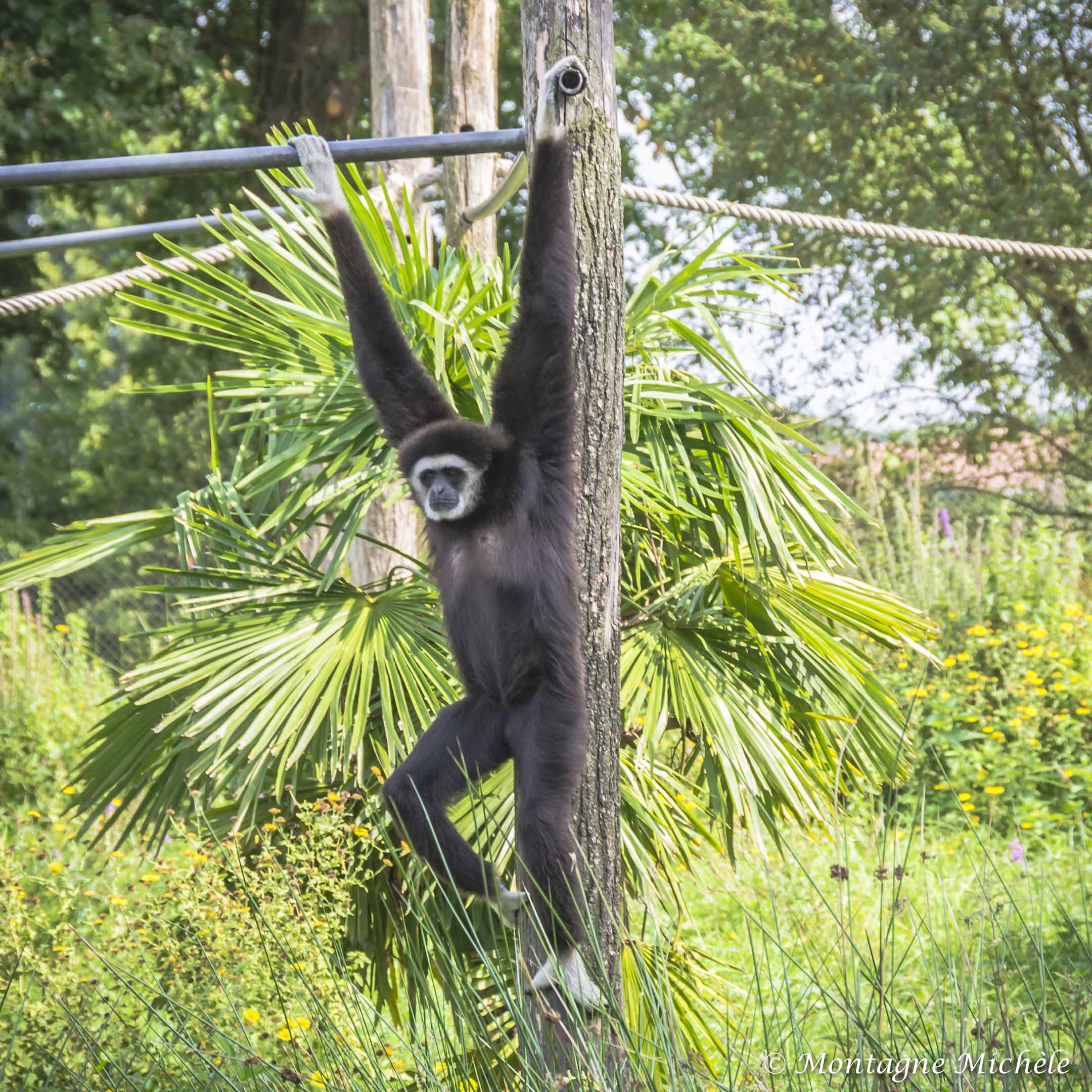 140909_Spaycific Zoo_0045-2