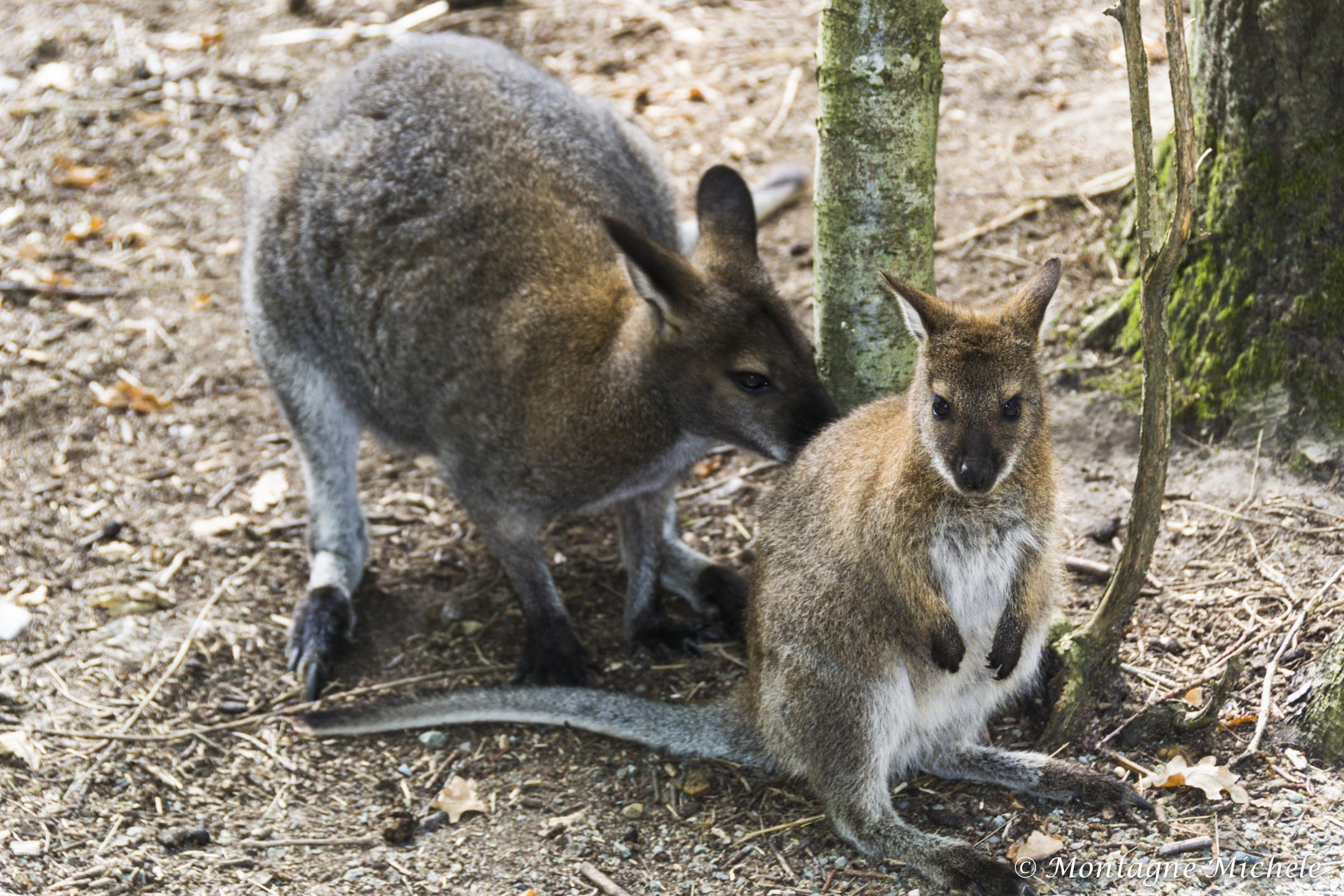 140909_Spaycific Zoo_0054-2