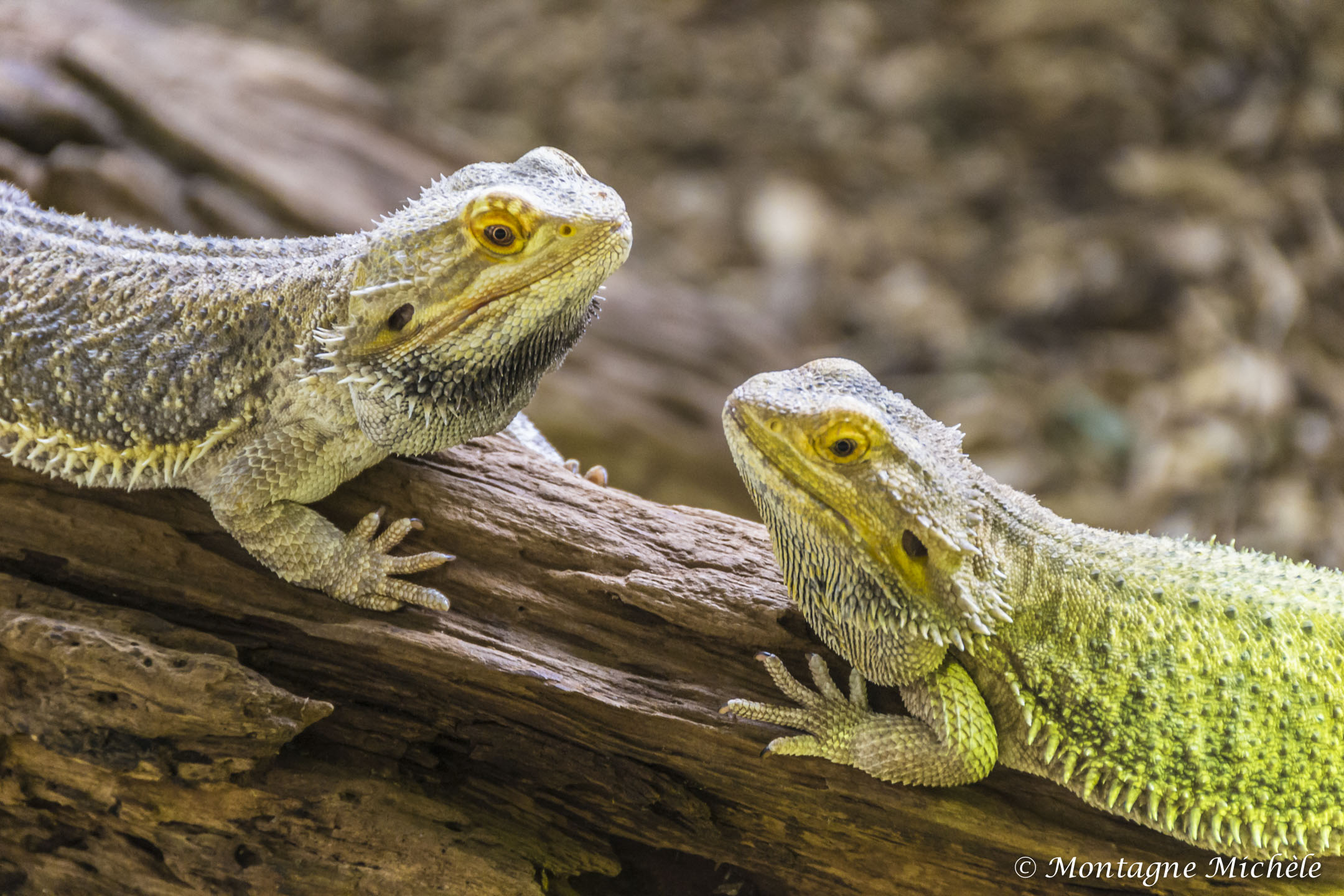 140909_Spaycific Zoo_0072-2