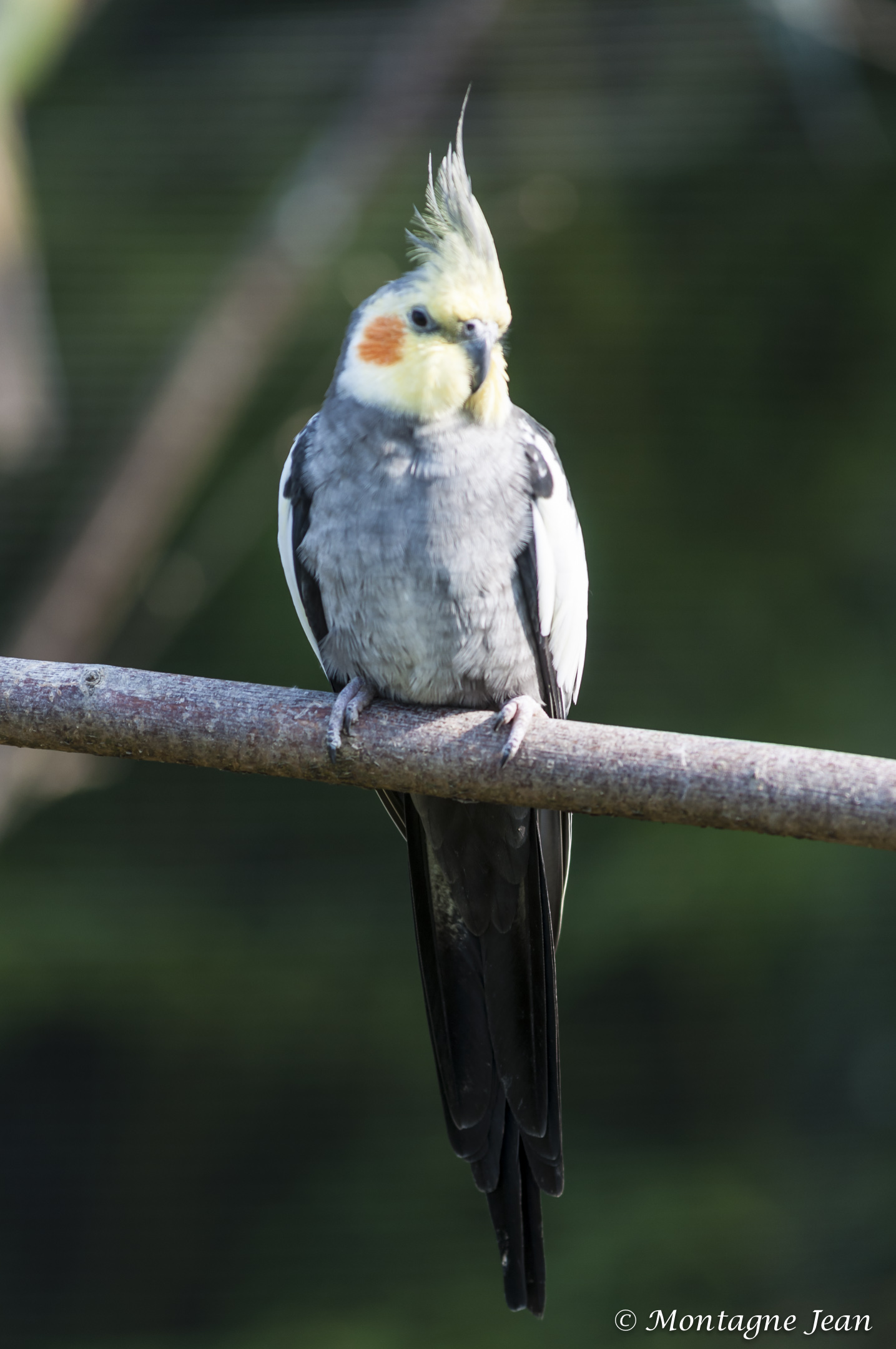 140909_spaycific Zoo_0048