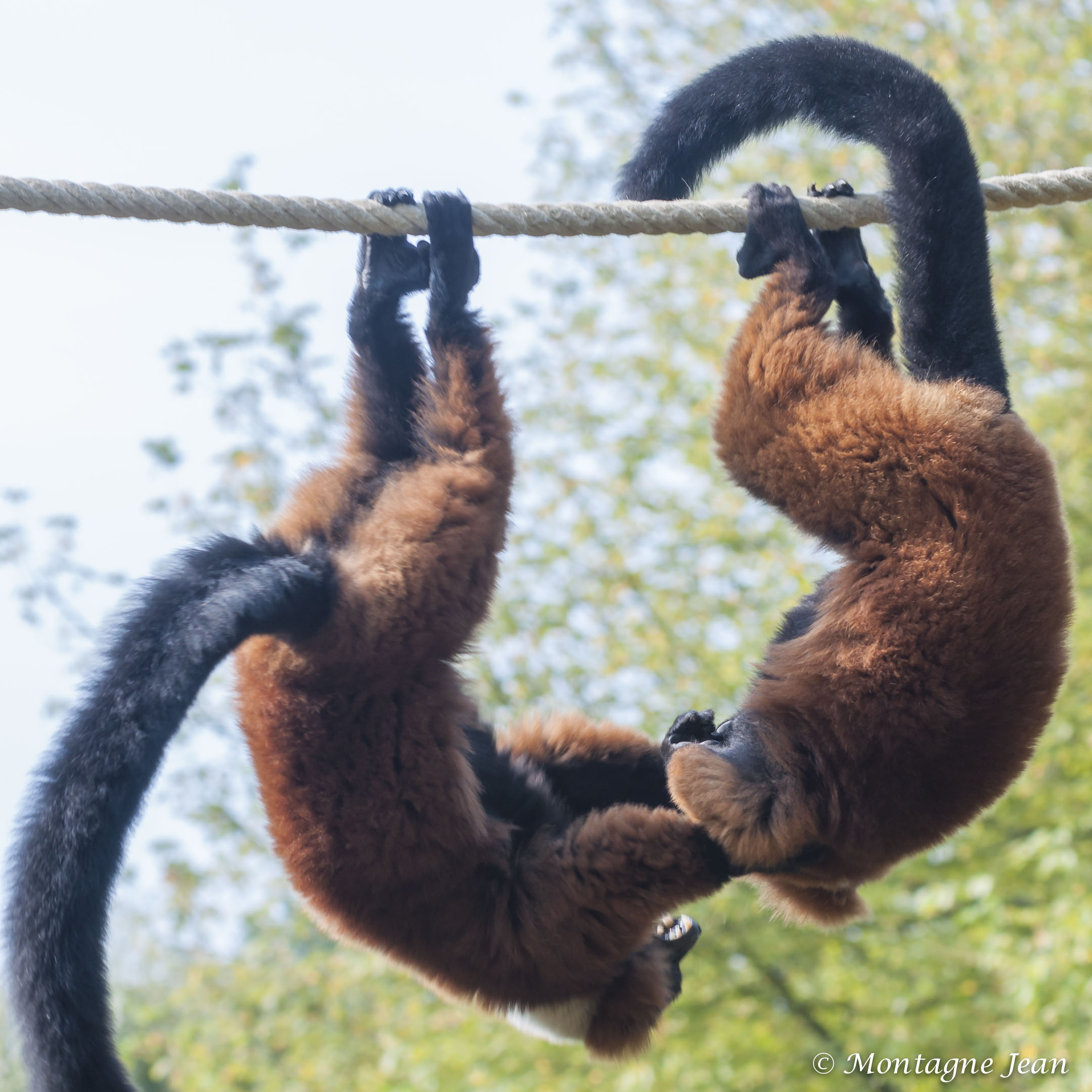 140909_spaycific Zoo_0166
