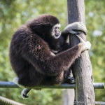 140909_Spaycific Zoo_0040-2