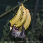 140909_Spaycific Zoo_0062-2