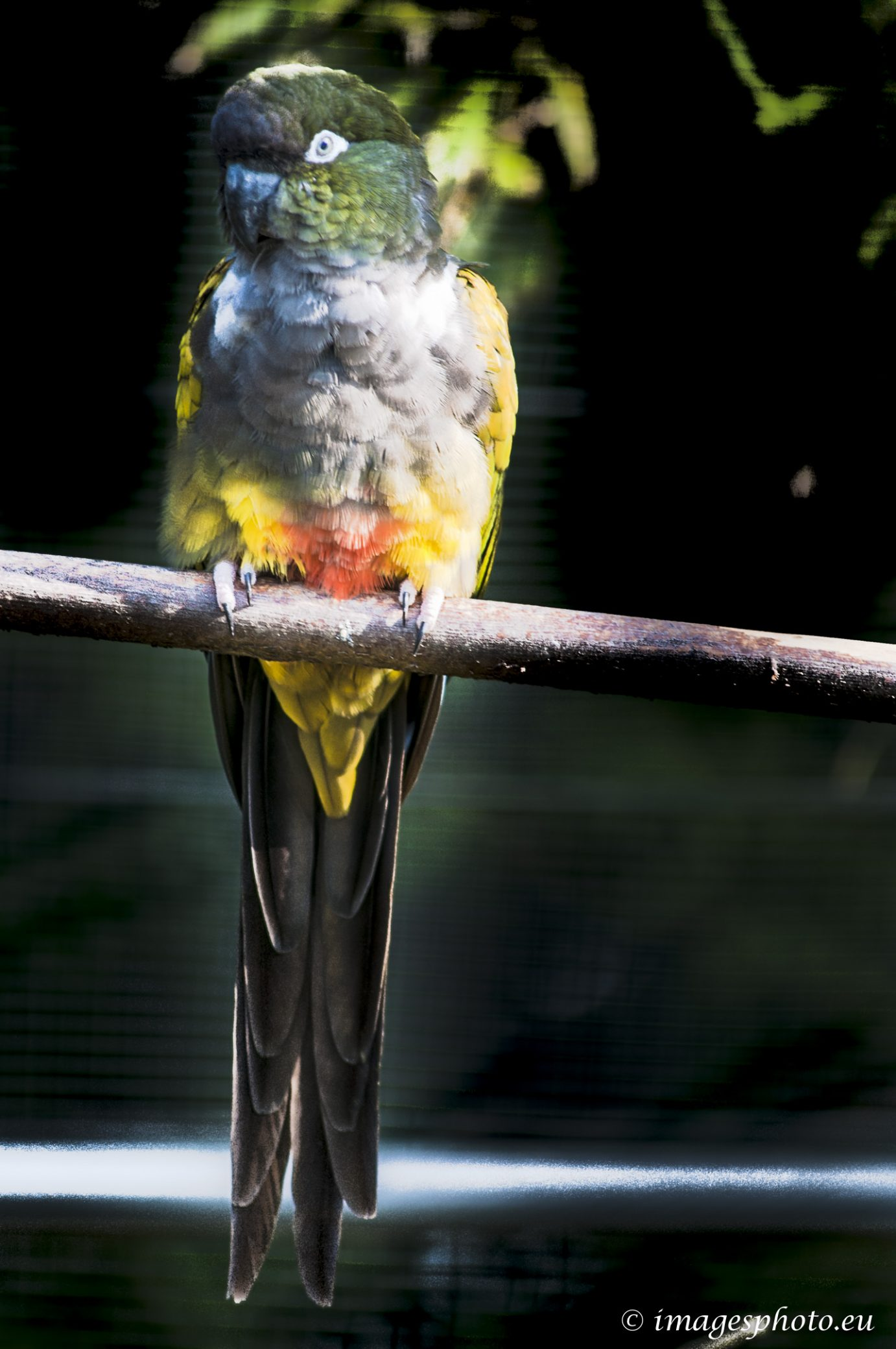 140909_spaycific-zoo_0023