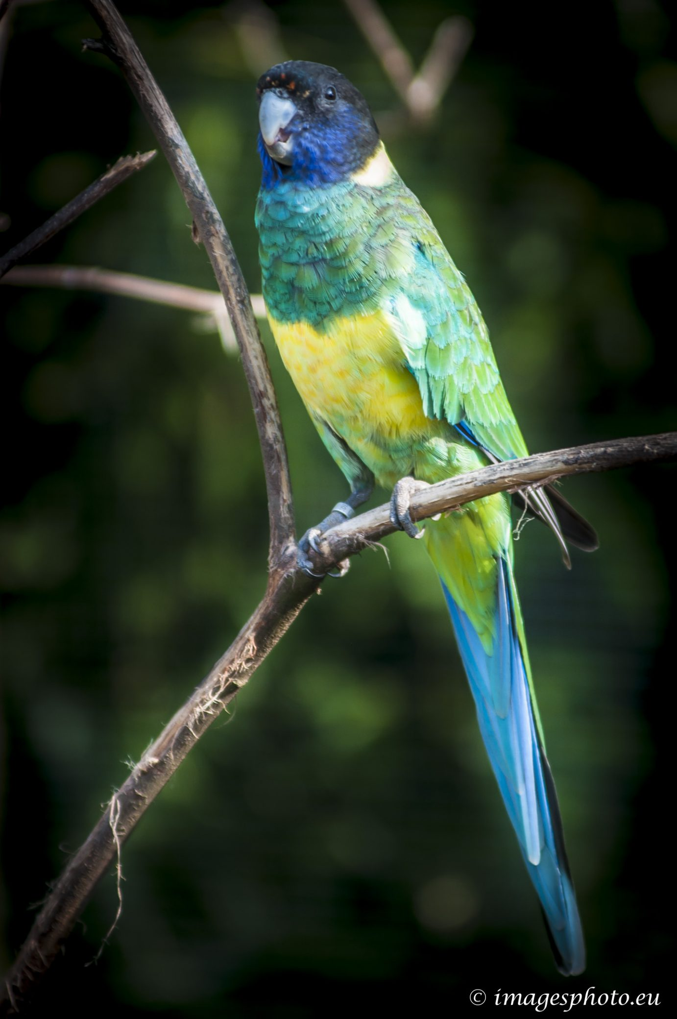 140909_spaycific-zoo_0051